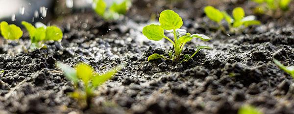 Prêter son jardin, partager les récoltes
