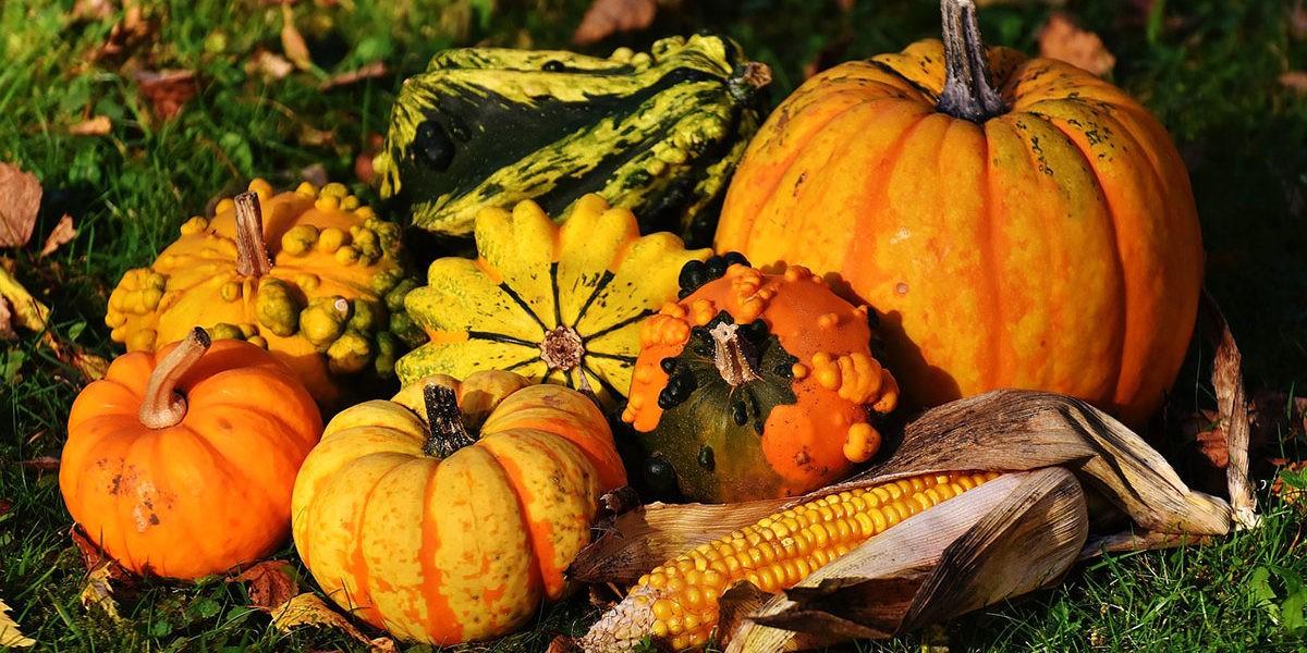 Que récolter en septembre au potager ?