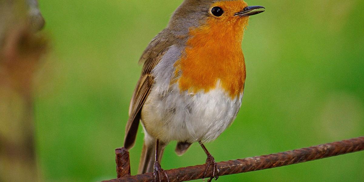 Faire revenir les oiseaux dans votre jardin