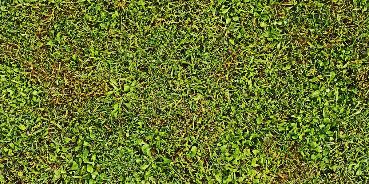 Rénover sa pelouse
