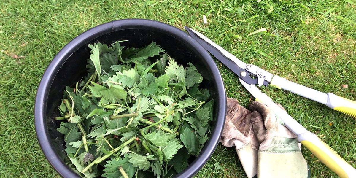 Les purins en agriculture biologique