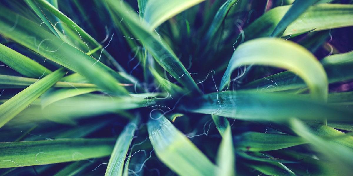 Quelques exemples de plantes dépolluantes
