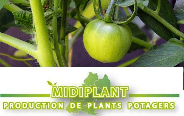 Midiplant
