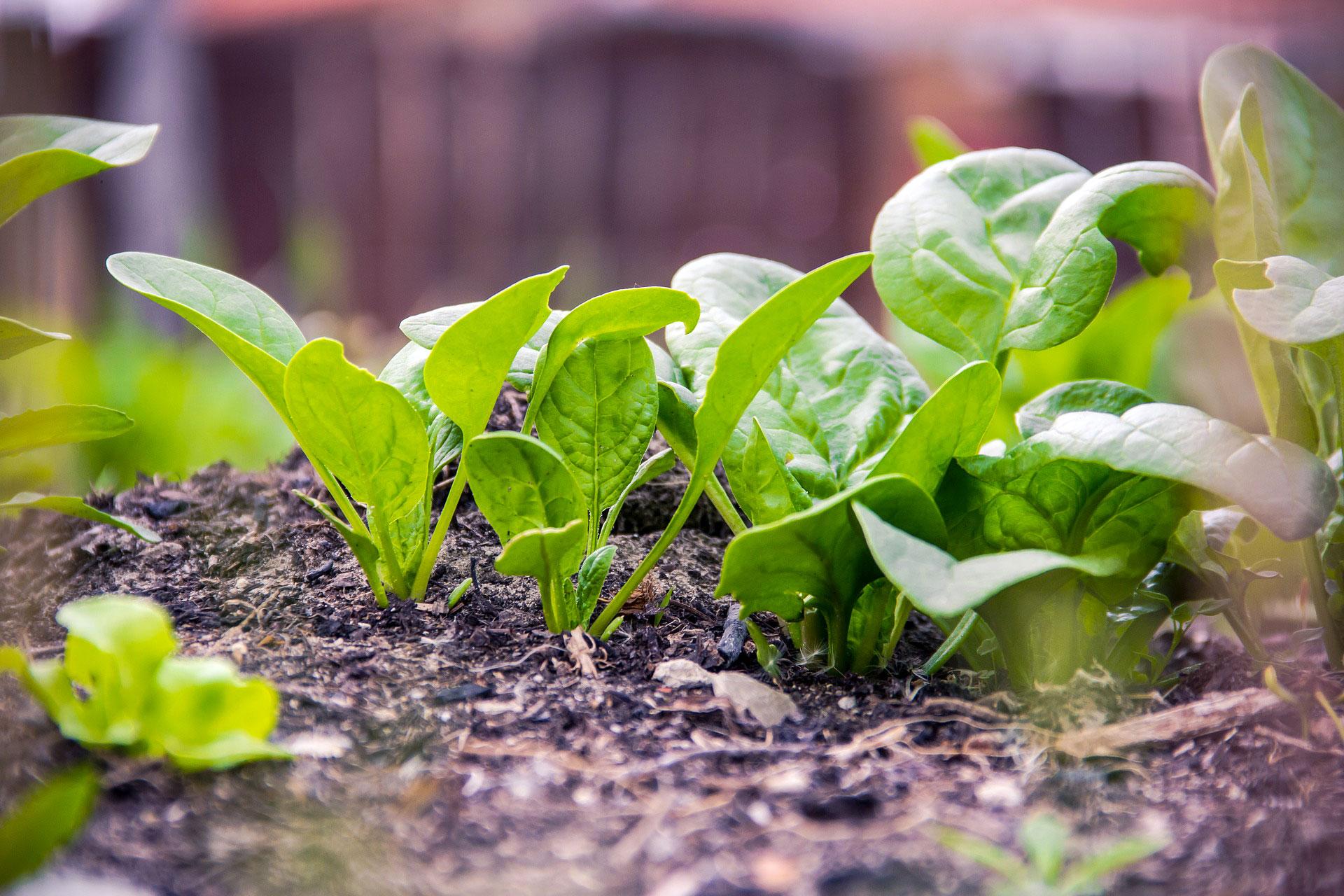 Quoi Planter En Octobre que planter en mars au potager ? - fiches pratiques du jardin