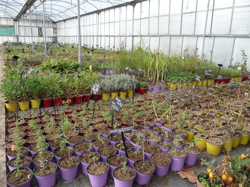 Production horticole des Arômes du grès