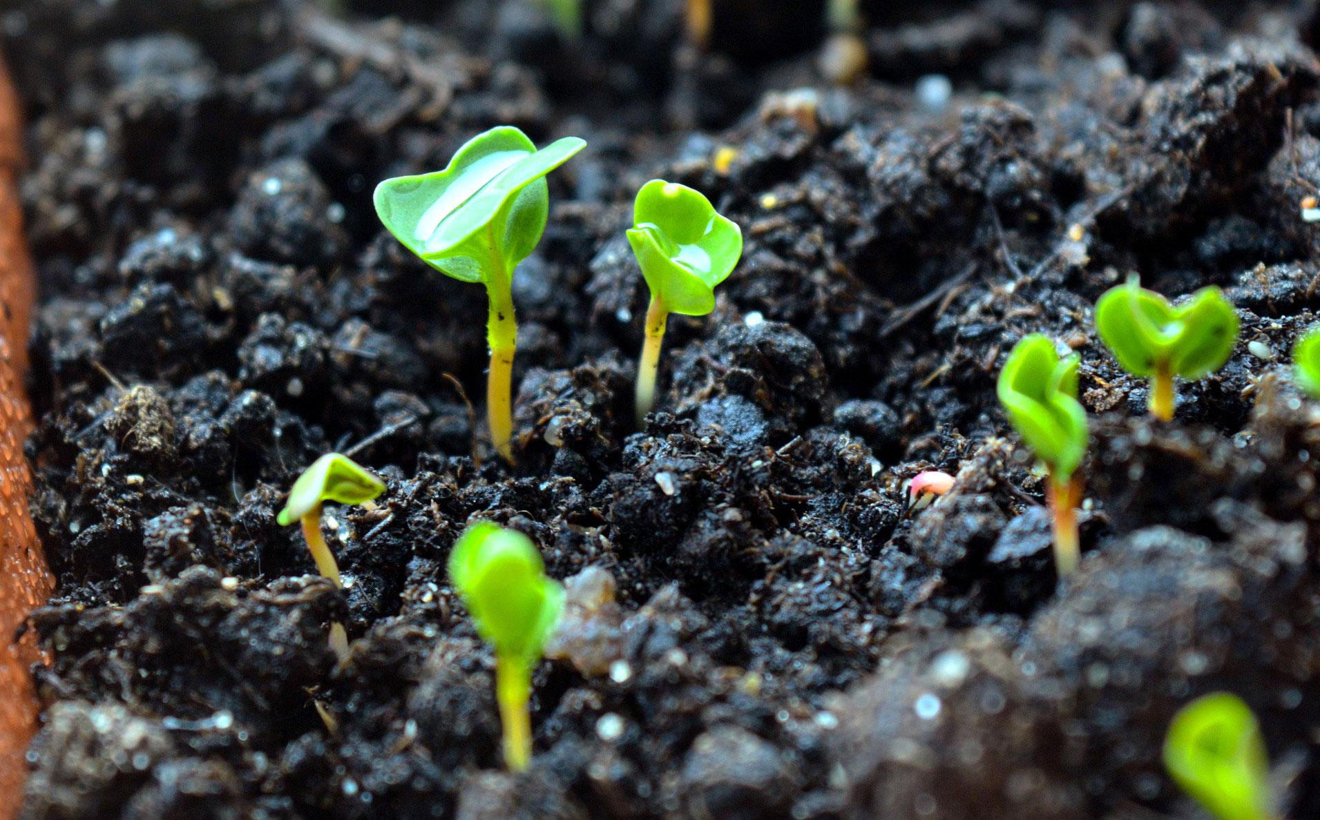 Que Planter En Octobre Sous Serre que semer en avril au potager ? - fiches pratiques du jardin