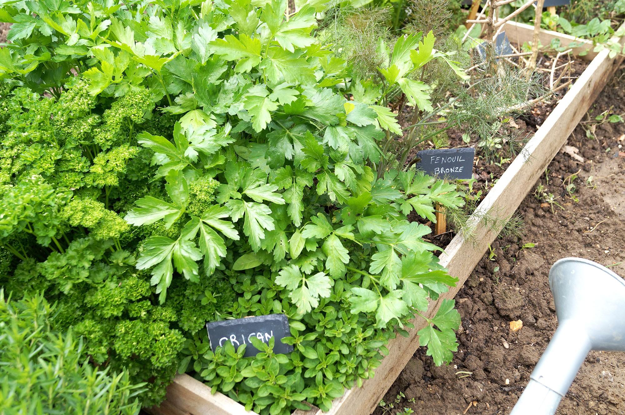 Que r colter en mai au potager fiches pratiques du jardin - Que planter en mai au potager ...