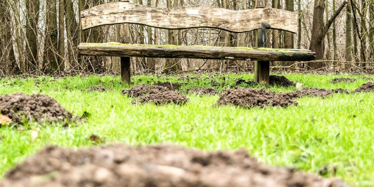 Eloigner les taupes de son jardin potager