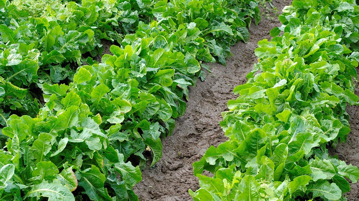 Quoi Mettre Au Potager En Septembre que planter en août au potager? - fiches pratiques du jardin