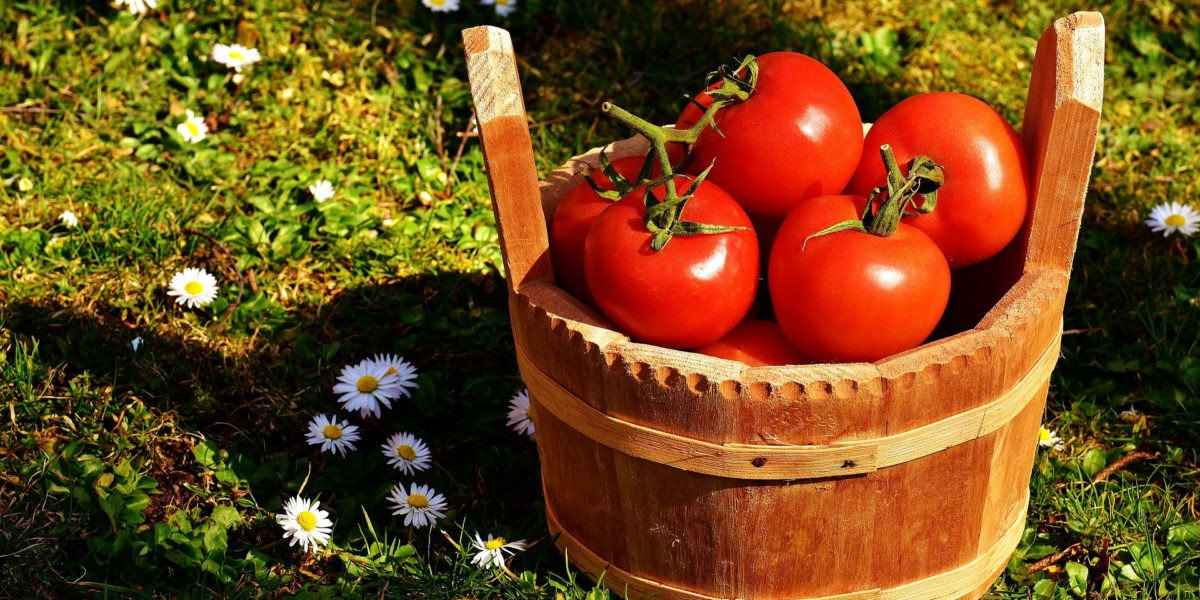 Que R Colter En Juillet Au Potager Fiches Pratiques Du Jardin