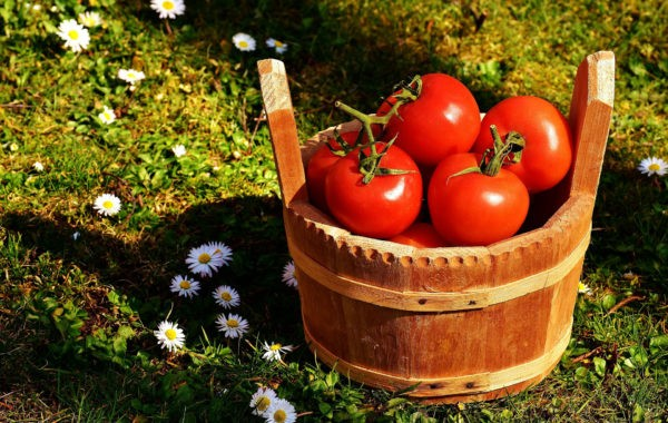 Que récolter en juillet au potager ?