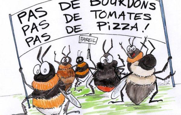 Protégeons les pollinisateurs