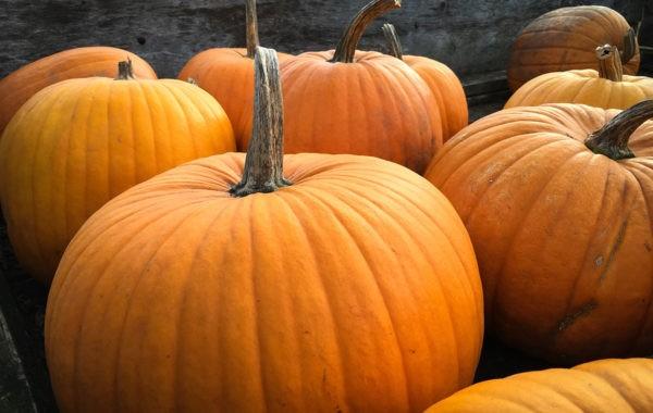 Que récolter en octobre au potager ?