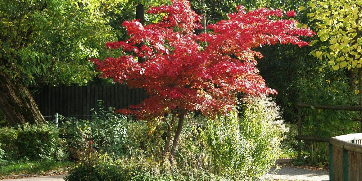 Les arbustes en automne
