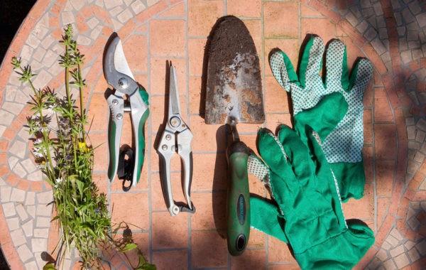 Que faire en janvier au jardin ?