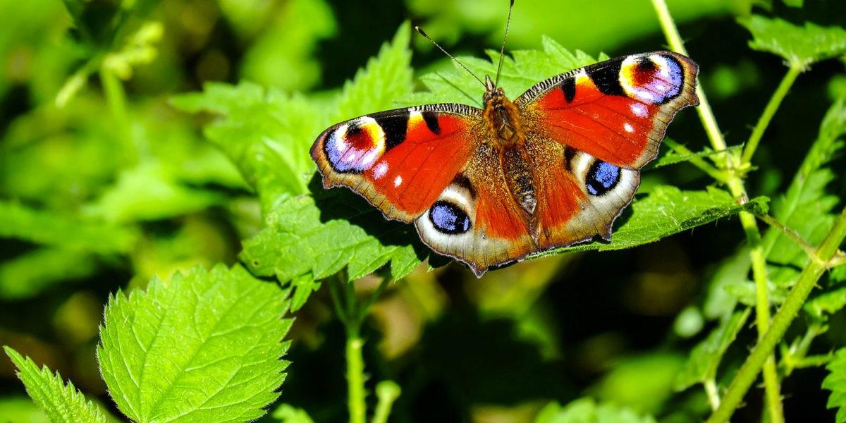 Quelques astuces pour un jardin écolo et vivant !