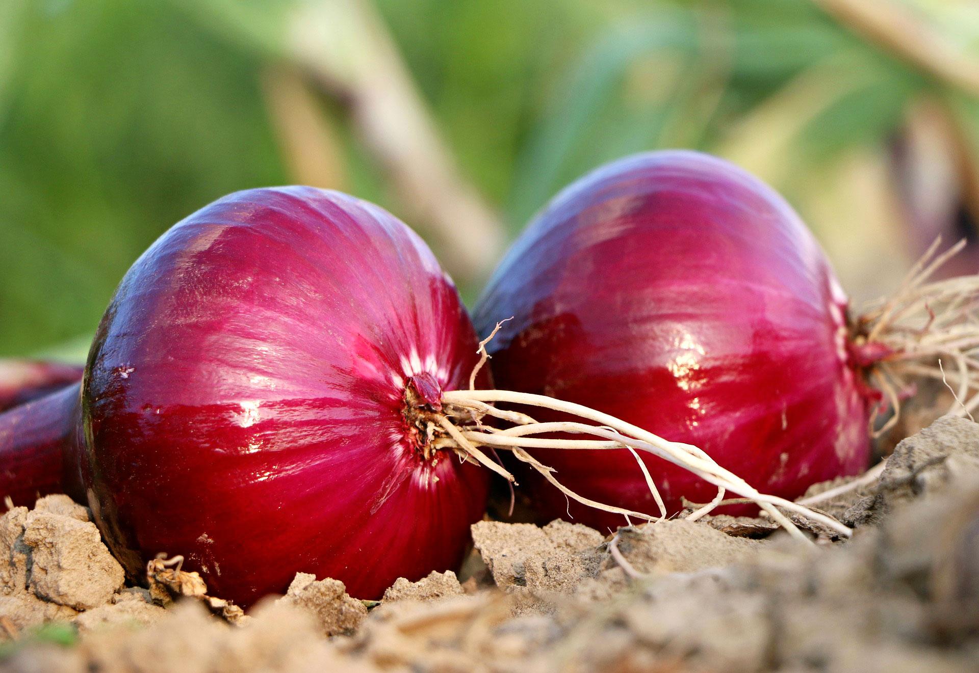 Que Faire Dans Le Potager En Fevrier que planter en février au potager ? - fiches pratiques du jardin