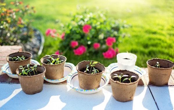 Que semer en février au potager ?