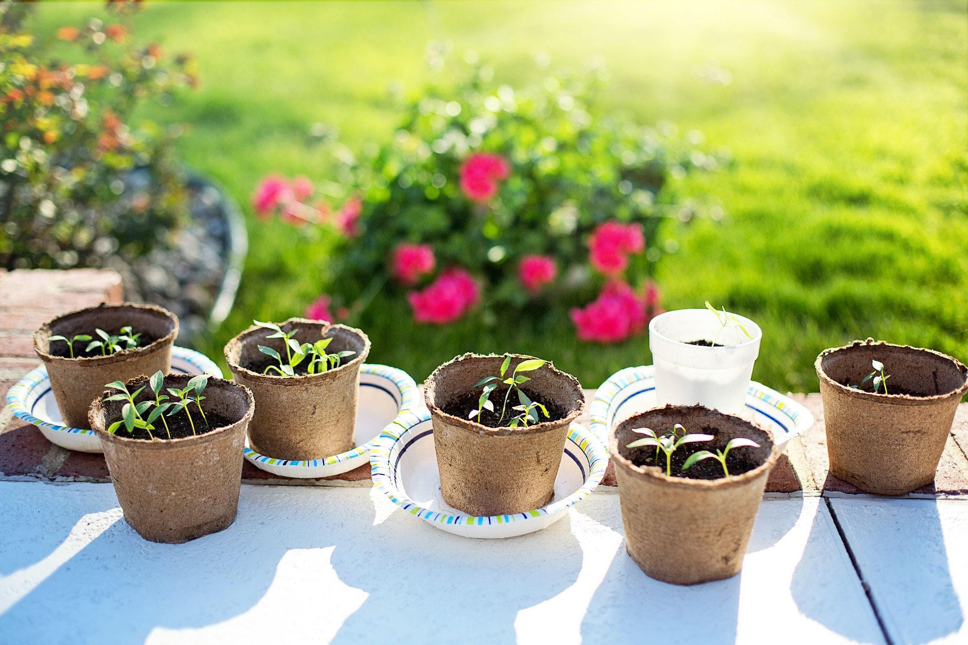 Que Faire Dans Le Potager En Fevrier que semer en février au potager ? - fiches pratiques du jardin
