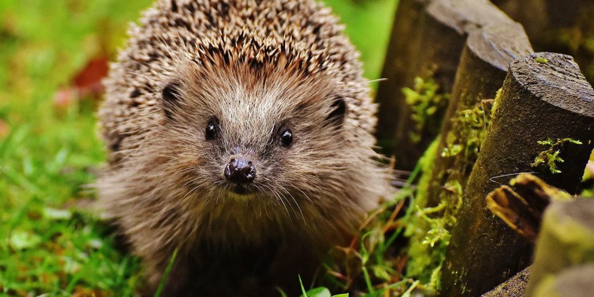 Découvrez la faune de votre jardin : les utiles