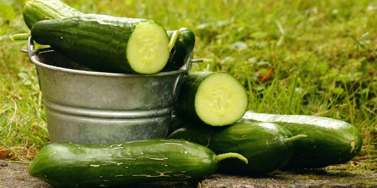 Concombre : un fruit fraicheur