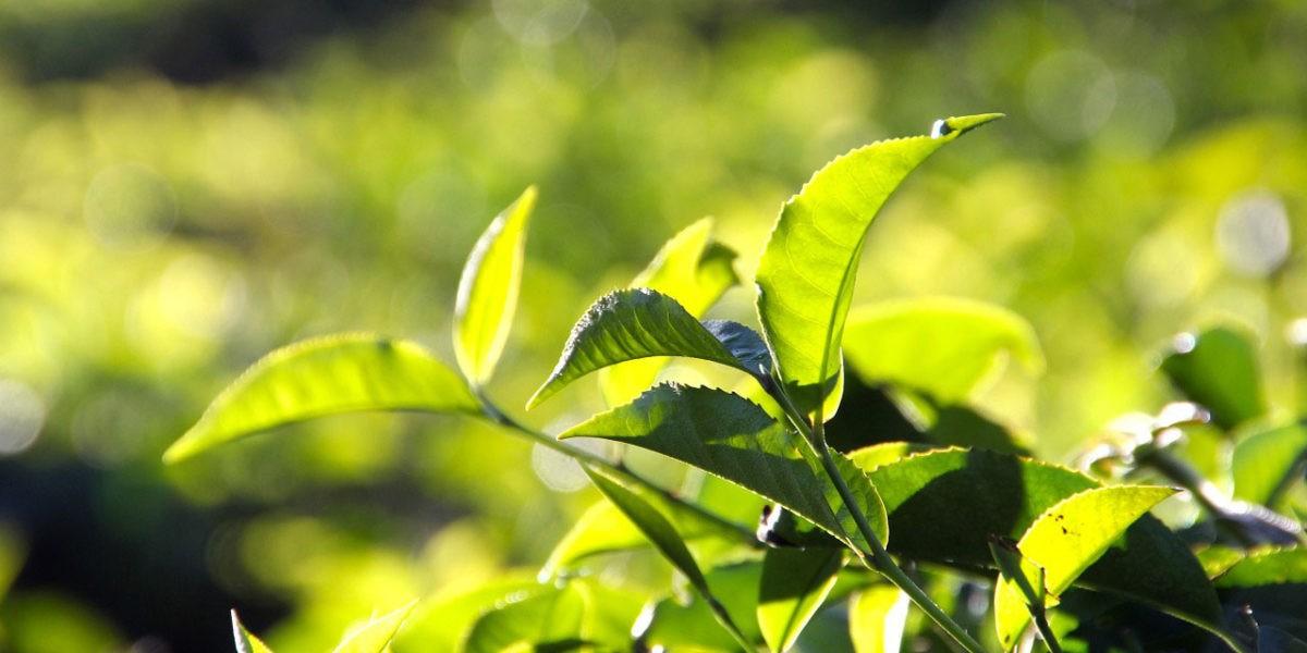 Les fertilisants naturels