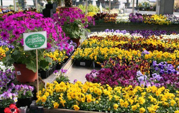 Jardinerie Au Jardin des Plantes