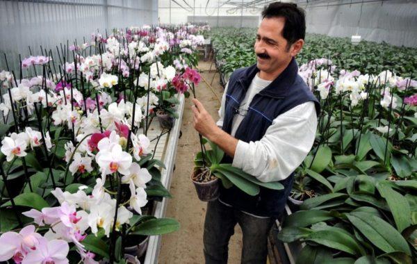 Boffo Frères Orchidées