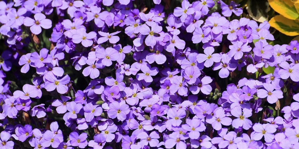 Choisir les bonnes plantes pour une bordure naturelle