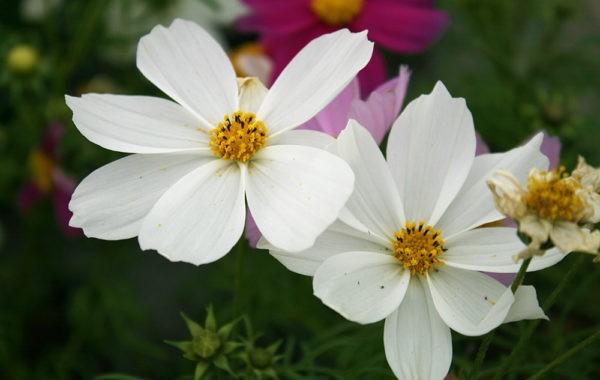 Production horticole Marty Fleurs