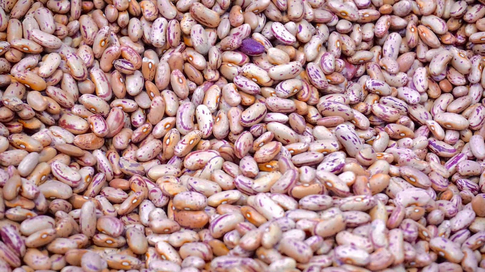 haricot ou viande de pauvre - fiches pratiques du jardin