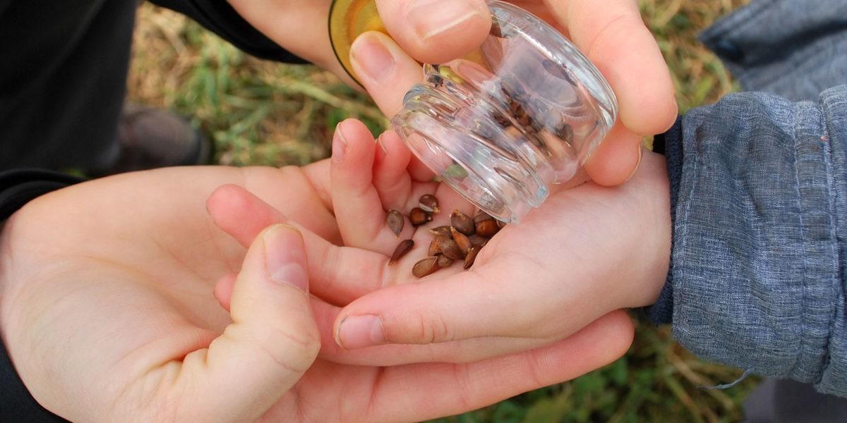 L'échange de graines pour la biodiversité