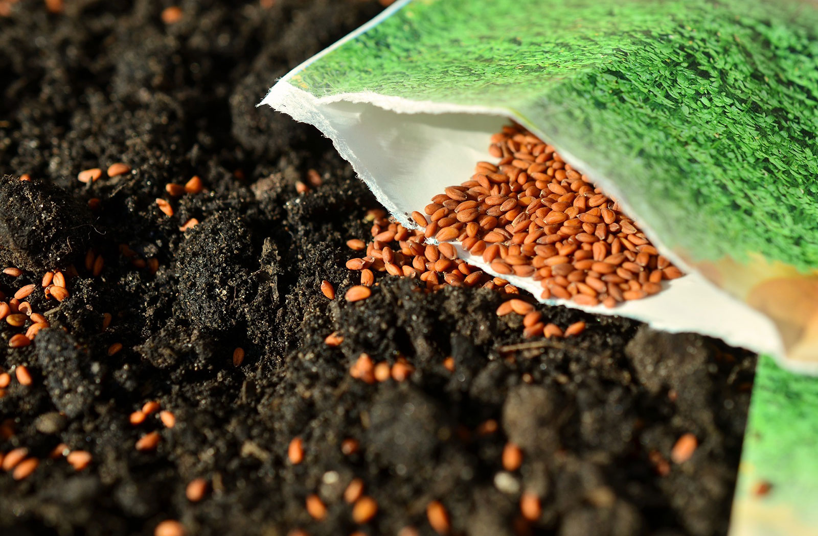 Quand Faut Il Semer Les Tournesols récolter des graines pour les semer le printemps suivant