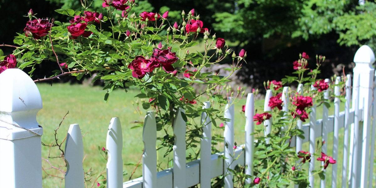 Jardinage et voisinage