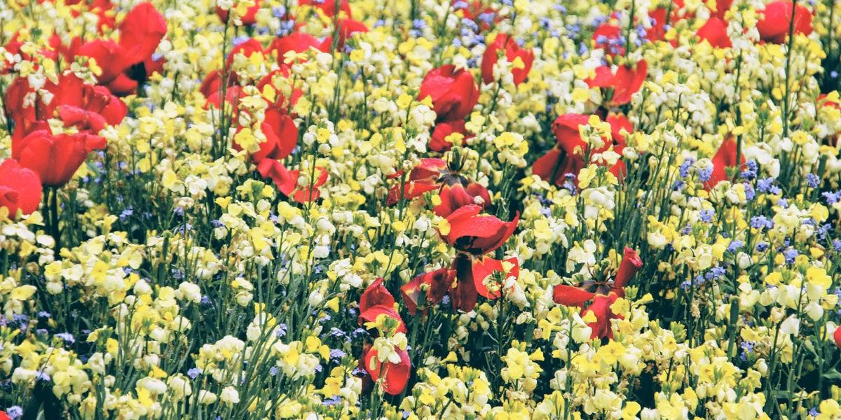 Une prairie fleurie