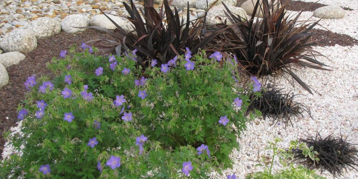 Choisir les plantes et le gravier d 39 un jardin sur gravier for Choisir plantes jardin