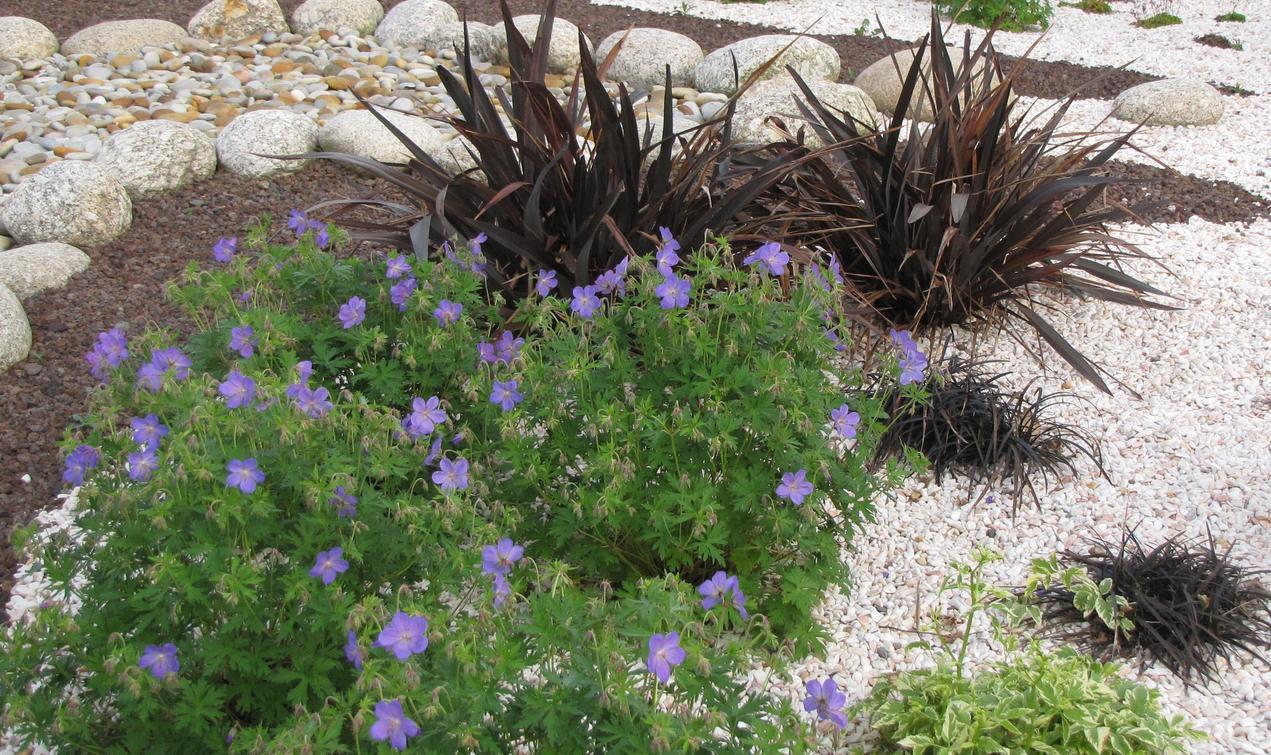 Realiser Massif Avec Galet choisir les plantes et le gravier d'un jardin sur gravier