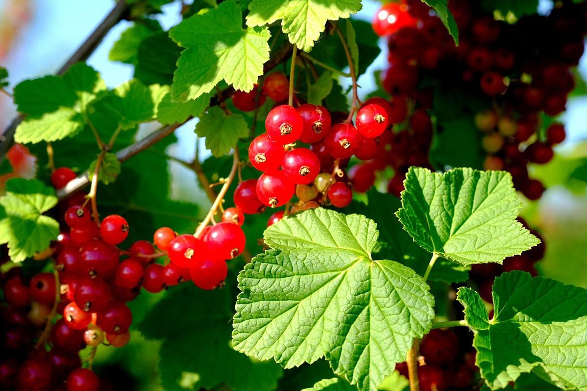 Quoi Planter En Octobre que planter en octobre au potager ? - fiches pratiques du jardin