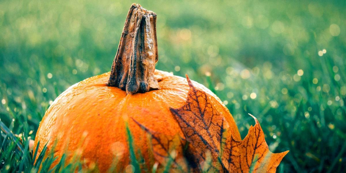 Potiron : le légume d'automne
