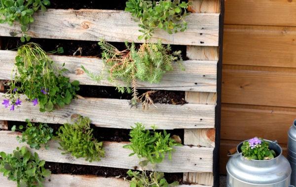 Idée récup : Un mur végétal avec une palette en bois