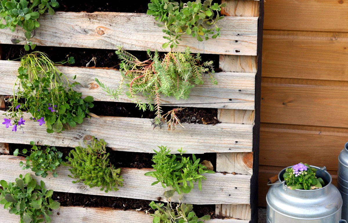 Mur Végétal Extérieur Palette idée récup : un mur végétal avec une palette en bois - blog