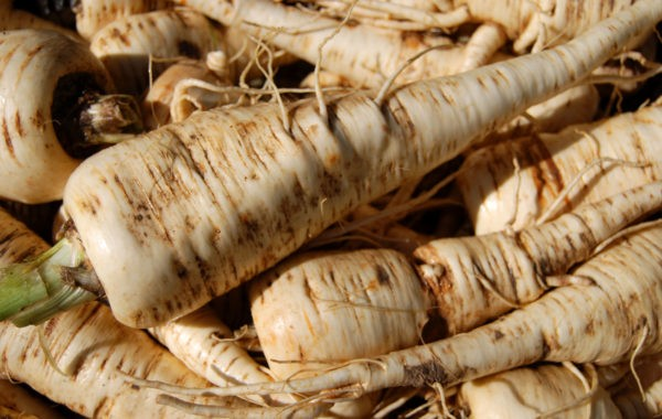 Salsifis : un légume riche en fibres