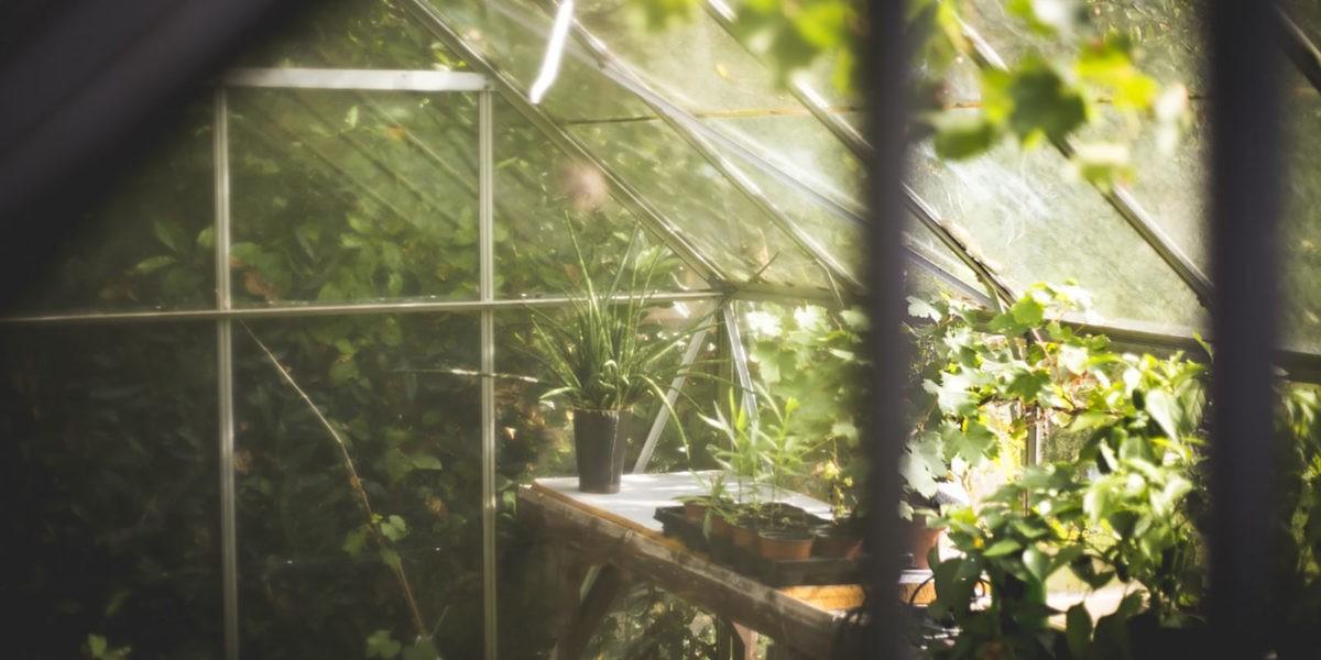 Quel type de serre pour quelles orchidées ? - Blog jardin