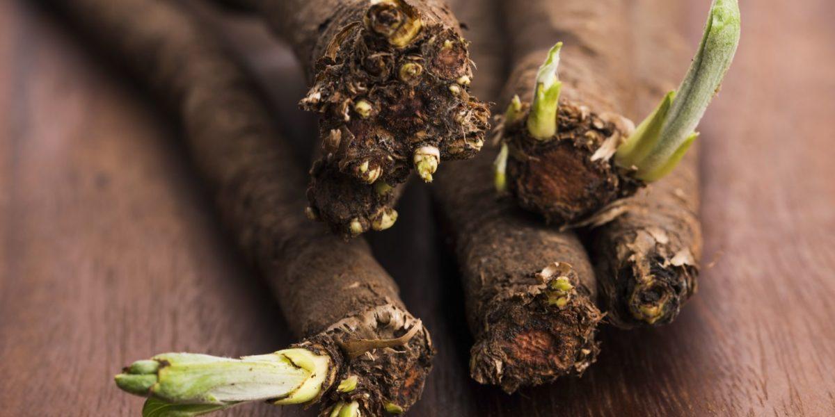 Scorsonère : la saveur d'un légume oublié
