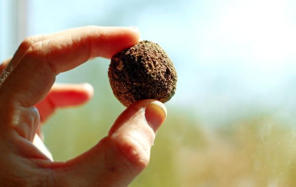 Fabriquez des bombes à graines pour semer la biodiversité !