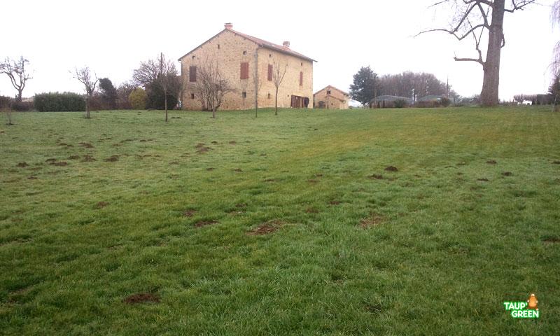 Le taupier de la Gironde