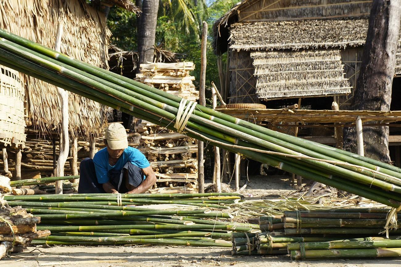 Coupe de bambous