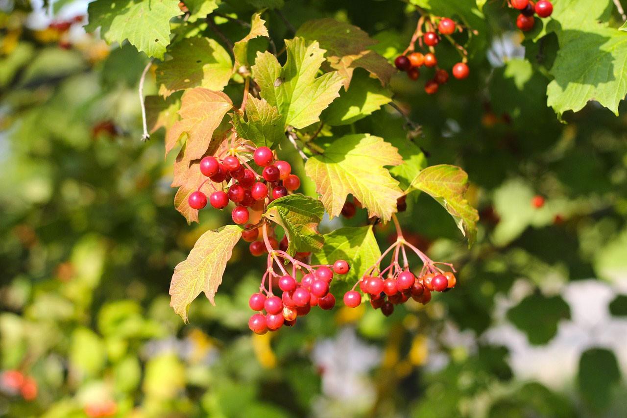 Arbustes en automne