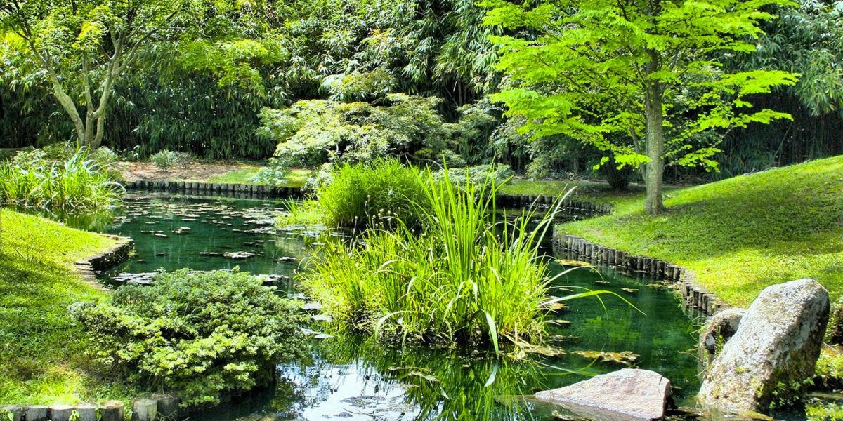 Une piscine naturelle dans son jardin