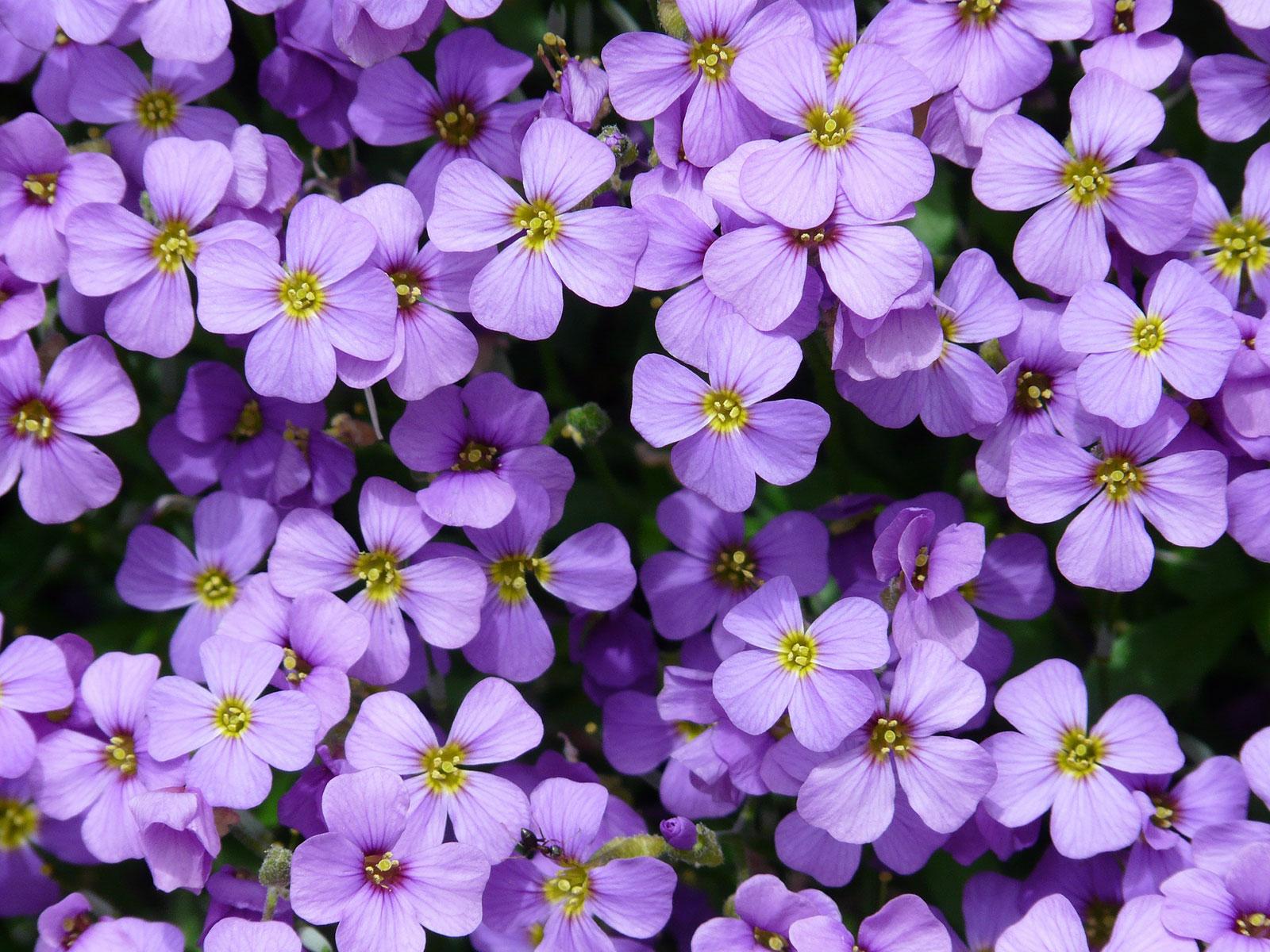 Choisir Les Bonnes Plantes Pour Une Bordure Naturelle Blog Jardin
